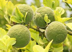 Vyzrajte s citrusy na podzimní únavu